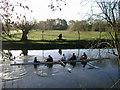 SP2965 : River Avon by Emscote Gardens, Warwick 2014, February 22, 08:16 by Robin Stott