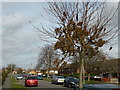 TF0920 : Catkins in Queens Road by Bob Harvey