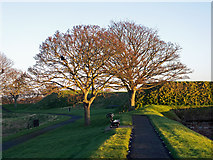 NU0052 : On the walk around the ramparts at Berwick-upon-Tweed by Julian Paren