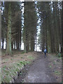 SD7355 : Concessionary path through tall conifers, Stocks Reservoir by Karl and Ali