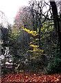 SJ8999 : Swampy valley opposite Brookdale Park by Linden Milner