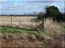 TF1020 : Looking across Car Dyke near Bourne by Marathon