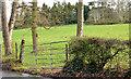 J3975 : Field gate, Glenmachan, Belfast by Albert Bridge