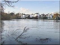 TQ1673 : The Thames below Eel Pie Island, February 2014 by Stefan Czapski