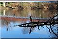 NS3421 : Bird on Branch, River Ayr by Billy McCrorie