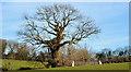 J5172 : Tree and field gate near Newtownards by Albert Bridge