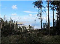 J3630 : Forest break in Donard Wood affording a view of Dundrum Bay by Eric Jones