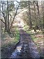 SE8589 : Path in Thwaite Wood by Gordon Hatton