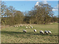 TQ0350 : Winter pasture by Alan Hunt