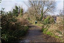 TQ3187 : Capital Ring towards Highgate by Ian S
