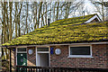 TQ2896 : Moss on Roof, Trent Park, Cockfosters, Hertfordshire by Christine Matthews