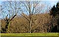 J3977 : Leafless trees, Redburn, Holywood by Albert Bridge