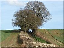 TQ0147 : Near Little Halfpenny Farm by Alan Hunt
