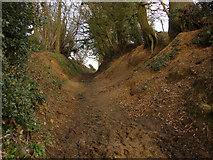 TQ0147 : Greensand cutting by Alan Hunt