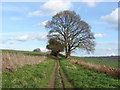TQ0147 : Hedgerow oak by Alan Hunt