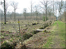 TM1497 : Cleared area in Lower Wood Nature Reserve by Evelyn Simak
