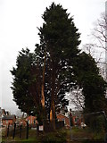 TM1543 : Damaged tree on Ancaster Road by Hamish Griffin
