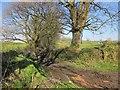 SX4674 : Green lane north of Stilesweek by Derek Harper