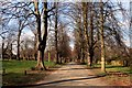 SK5439 : Tree-lined avenue in Wollaton Park by Graham Hogg
