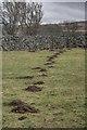 NY9127 : Molehills in a Field by Mick Garratt