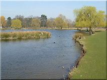 TQ1669 : Heron Pond, Bushy Park by Marathon