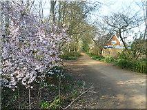 TQ1469 : Path in the Waterhouse Woodland Garden, Bushy Park by Marathon
