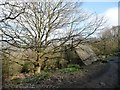 SE2244 : Chevin Forest Park [13] by Christine Johnstone