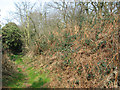 TG1612 : Bracken and brambles beside the footpath by Evelyn Simak