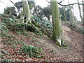 TG1812 : Old trees growing by Drayton Green Lanes by Evelyn Simak