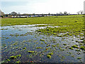 NY4053 : Waterlogged field near Hammonds Pond by Rose and Trev Clough