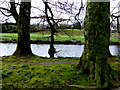 H4772 : A mossy riverbank, Cranny by Kenneth  Allen