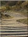 NT2570 : Steps, Blackford Hill by Richard Webb