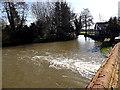 TM3691 : Mill Pool near Ellingham Mill by Adrian Cable