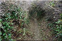 SX5746 : Narrow path down to Wadham Beach by jeff collins