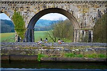 SJ2837 : Early Morning at Chirk Aqueduct and Railway Viaduct +Ducks & Sheep by Peter Skynner