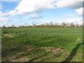 TM2786 : Oilseed rape crop by Station Farm by Evelyn Simak
