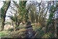 TM1650 : Green Lane by N Chadwick