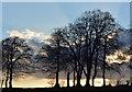 SU4856 : Tree line against the sky on Wayfarer's Walk, near Ladle Hill, Hampshire by Edmund Shaw