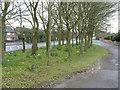 SK5040 : Bilborough Road by Alan Murray-Rust