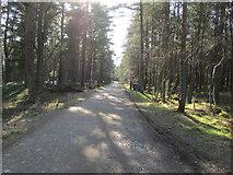 NH9317 : Forest track at Boat of Garten by Jennifer Jones