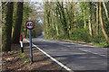 TQ0956 : Old Lane, Effingham Junction by Stephen McKay