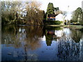SU9495 : Tree reflections, Coleshill duck pond by Peter S
