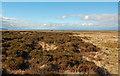 NR3255 : Eilean na Muice Duibhe by Mary and Angus Hogg