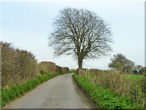 SU6615 : Dogkennel Lane by Robin Webster