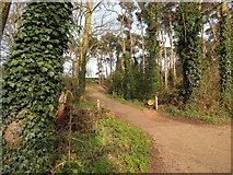TM1645 : Sidepath in Christchurch Park by Hamish Griffin