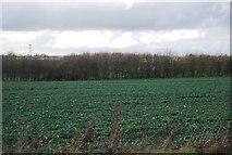 TM1551 : Farmland near Henley by N Chadwick