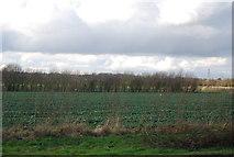 TM1551 : Farmland west of Henley by N Chadwick