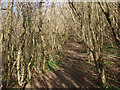 SS8577 : The Newton to Candleston Circular Walk in Cwm y Gaer by eswales