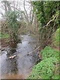 ST5756 : The River Chew downstream from Shrowl Bridge by Dr Duncan Pepper