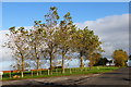 NS3717 : A stand of trees off the road to Sessionfield, Ayr by Phillip Gamble